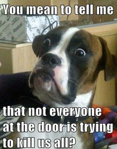 Please tell my dogs this......idiots