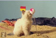 And the absolute best boop of 2013. | The 15 Most Delightful GIFs Of 2013