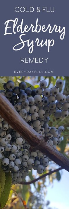 ELDERBERRY SYRUP ELIXIR - Fight back against the cold and flu this year with this elderberry elixir. Proven help keep you healthy and shorten your down-time if you do get sick. #coldandflu #elderberries #elderberrysyrup #remedies