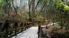 McDonald-Dunn Forest, Corvallis, Oregon, from @neuoregon.