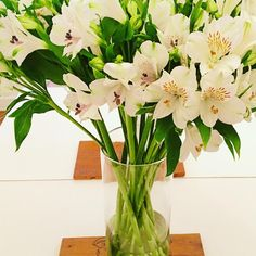#springtime #spring #sp #brazil #decoration #flowers #white #green