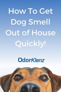Dog smell stuck in your house? Learn why dogs stink so bad, and how to tell if your house smells like a dog! The OdorKlenz Source Treatment and Odor Eliminator Pad are both great solutions for dog smell in your house. Dog Smells, House Smells, Pet Dander, Pet Odors, Heimlich Maneuver, Smelly Dog, Pet Odor Eliminator, Odor Remover, Dog Shampoo