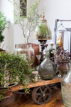 A vintage trolley is home to plants and terrariums-gorgeous cloches and glass!
