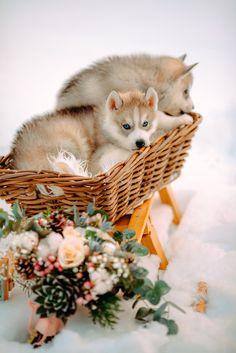 Puppies in the snow - wedding styled shoot   fabmood.com #wedding #winterwedding #outdoorwedding #snow #bride #weddingdress #peach