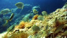 Beautiful reefs in the marine protected area of Porto Cesareo with Orca Diving Center, Salento, Puglia