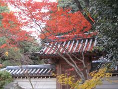 Akishinodera Temple (Nara, Japan): Address, Religious Site Reviews - TripAdvisor