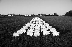 Jorinde Reijnierse - Front-End Developer & Photographer Cloud Seeding, Make It Rain, Beijing, Olympics, To Go, Clouds, America, Technology, People