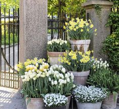 Container gardening Inspirational suggestion 1379563827 to try for your outdoor space. Container gardening Inspirational suggestion 1379563827 to try for your outdoor space. Farm Gardens, Small Gardens, Outdoor Gardens, Container Plants, Container Gardening, Garden Cottage, Plantation, Garden Planters, Dream Garden
