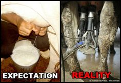 Expectation vs. Reality: Factory Farms, more here: http://www.peta.org/living/vegetarian-living/expectation-vs-reality-factory-farms.aspx #vegan #govegan