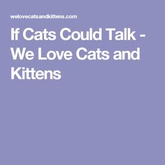 If Cats Could Talk - We Love Cats and Kittens