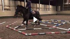 Es gibt viele Möglichkeiten mit seinem Pferd zu trainieren. Eine davon ist die Stangenarbeit. In diesem Video bekommt ihr einen Einblick in die Arbeit mit..