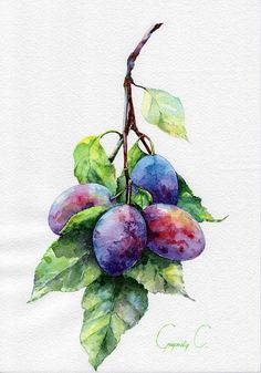 Plums Fruits Berries Red Blue Green Watercolor Original