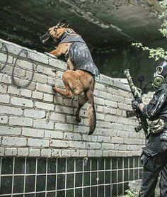 No words to be said but Wow....How amazing.....Gotta love those military dogs....God Bless Them All...