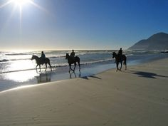 Noordhoek Beach - An expensive beach located near Cape Town, South Africa. Only miles) from the center of Cape Town, Noordhoek beach is amazing and ide Beach Rides, Nosara, Cape Town South Africa, Horse Riding, Trail Riding, Horseback Riding, Beautiful Beaches, The Great Outdoors, Tours