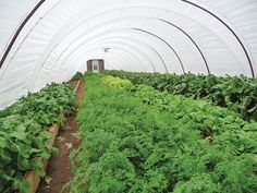 Hoop house horticulture creates many benefits