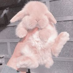 Just a bunny Baby Pink Aesthetic, Peach Aesthetic, Aesthetic Colors, Aesthetic Images, Aesthetic Collage, Aesthetic Anime, Aesthetic Shop, Cute Baby Bunnies, Baby Cats