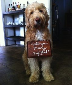 Use your pet to propose. | 29 Perfectly Adorable Ways To Include Your Pet In Your Wedding