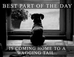 Best Part of the Day is coming home to a wagging tail.