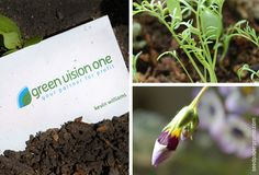 Green vision one chose an eco friendly seed paper business card that green vision one chose an eco friendly seed paper business card that leaves no waste reheart Gallery