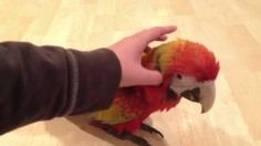 camelot macaw - YouTube