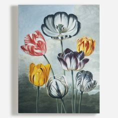 Global Gallery 'Tulips' by Robert John Thornton Framed Graphic Art Size: 2 Painting Frames, Painting Prints, Art Prints, Canvas Wall Art, Canvas Prints, Wall Art Wallpaper, Still Life Art, Graphic Art, Tulips
