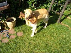 mein Hund Baily