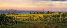 Along the quaint Viennese trail, Austria's oldest wine region The World's Greatest, Wine Tasting, Travel Inspiration, Vineyard, City, Outdoor, Vienna Austria, Posts, Cheese