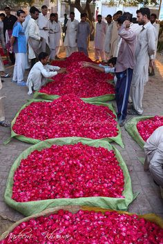 Rose Petals. Pakistan. Rose is used to flavour food, to make perfumes, as a component in some cosmetic and medical preparations, and for religious purposes throughout Europe and Asia.