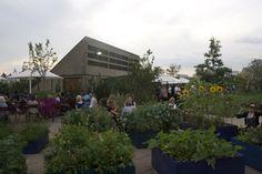 Edible roof garden // Queen Elizabeth Hall Roof Garden at the Southbank Centre