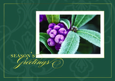 WINTER BERRY  A traditional holiday card with frosted winter berries, a damask pattern and rich gold foil will be appreciated by all who receive it. - See more at: http://greetingcardcollection.com/products/holiday-cards-holiday-greetings/470-winter-berry