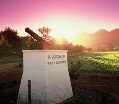 Kanonkop Wine Estate Cannon at the entrance Wine Chateau, South African Wine, Chateaus, Wine Time, Wineries, Cannon, Entrance, Cape, Vineyard