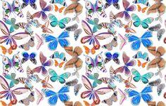 Butterfly Bounty Colorized fabric by angelaanderson on Spoonflower - custom…