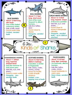 It's Shark Week! Fantastic set of non-fiction text features task cards with reading selections. Includes a bonus set of Shark posters! Shark Activities, Learning Activities, Kids Learning, All About Sharks, Science Topics, Teaching Science, Teaching Ideas, Ocean Unit, French Language Learning