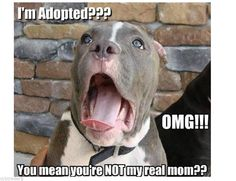 Funny animals with funny sayings .funny animals with funny sayings wallpaper .most popular funny animals seen.funny animals with funny quotes .best funny animals and funny wallpaper . Funny Animal Jokes, Funny Dog Memes, Cute Funny Animals, Cute Baby Animals, Funny Cute, Funny Dogs, Funny Pitbull, Super Funny, Funny Sayings