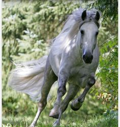 I would like to be riding this horse at that moment.