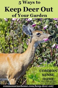 Keep deer out of your garden or yard and protect your harvest with deer deterrent options for every location and budget range. This guide shares 5 tips to on how to keep deer out of your garden, including deer repellent sprays, solid deer repellents, tactics that scare deer away, deer fences and other barriers to deer.