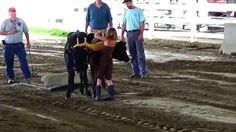Farmer's Steer & Oxen Pull Video (Part-1)