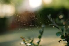 Spider web nature Bay Area Summer