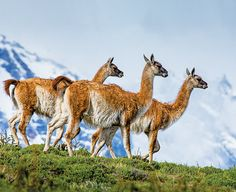 Cruise South American West Coast - Lindblad Expeditions