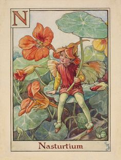 Nasturtium Fairy by Cicely Mary Barker - art print from King & McGaw