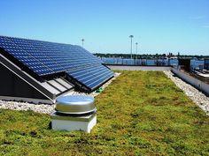"""Hemis s.r.o. on Instagram: """"Pri zelených strechách oceníte ich schopnosť ochladzovať budovy v teplých klimatických podmienkach a v chladných naopak prispievajú k…"""" Solar Panels, Water, Outdoor Decor, Instagram, Home Decor, Gripe Water, Homemade Home Decor, Solar Panel Lights, Sun Panels"""