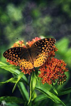 ~~Unbroken | Butterfly by JustinDeRosa~~