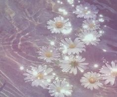 Image via We Heart It https://weheartit.com/entry/153399897 #daisies #daisy #grunge #indie #lavender #pale #tumblr #backgrounds