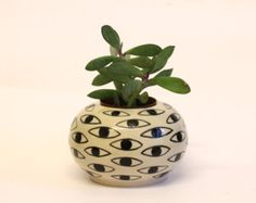 succulent pot black and white - Buscar con Google