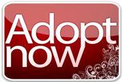 lovely orangutans for virtual adoption via BOS