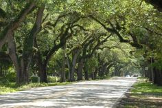 Coral Gables Tree Canopy