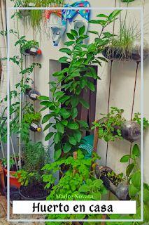 MADRE NOVATA: Beneficios de tener un huerto en casa. Plantar, Soda Bottles, Irrigation, Activities