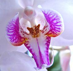 orchid  Photo by Inge hibiscusfloridakeys.com
