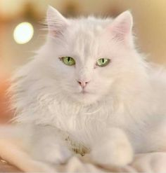 This cat is so beautiful!