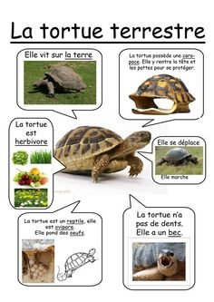 la tortue terrestre Grade 2 Science, Preschool Science, Science Lessons, Science For Kids, Science Projects, Science And Nature, French Education, Kids Education, French Classroom